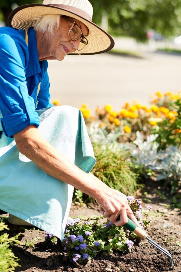 Hogere Vrouw die Bloemen in Tuin planten royalty-vrije stock foto's