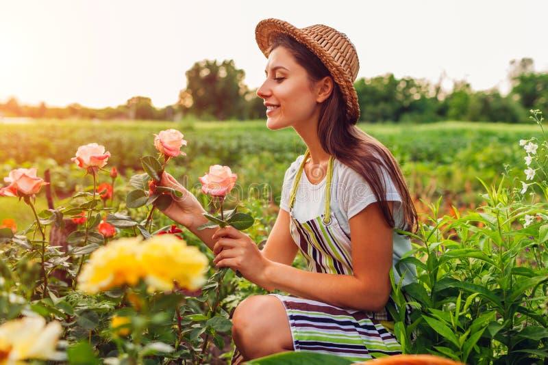 Hogere vrouw die bloemen in tuin verzamelen Vrouw die op middelbare leeftijd en het bewonderen rozen ruiken Het tuinieren concept stock afbeeldingen