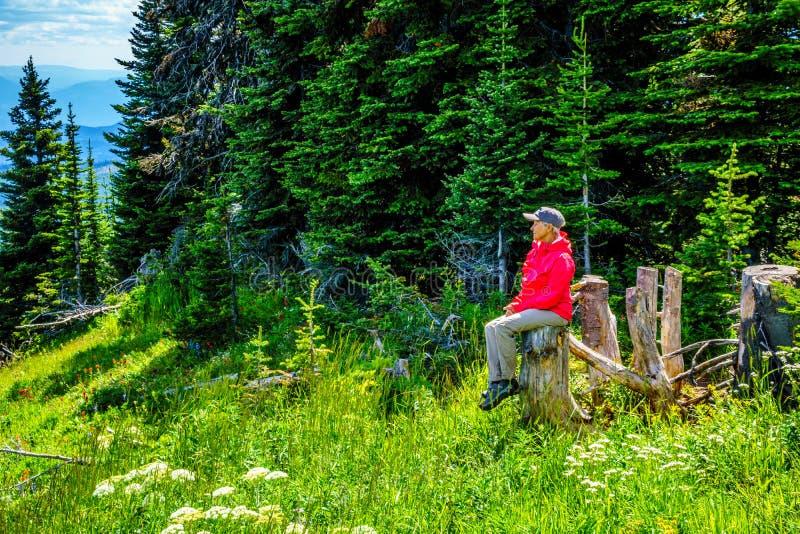 Hogere Vrouw die op een boomstomp tijdens een stijging door de berg alpiene weiden rusten met wilde Bloemen op Tod Mountain royalty-vrije stock afbeelding
