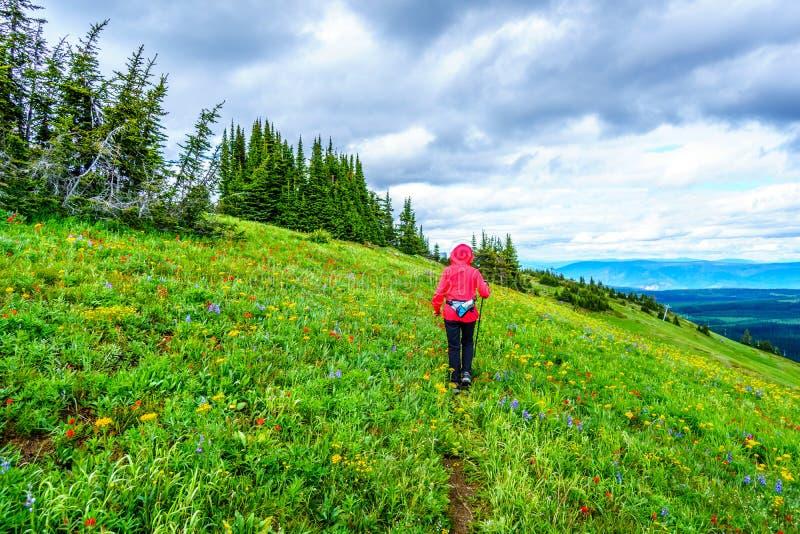 Hogere Vrouw die op Tod Mountain in de Shuswap-Hooglanden wandelen stock foto's