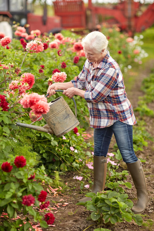 Hogere vrouw het water geven bloemen bij de zomertuin royalty-vrije stock afbeelding
