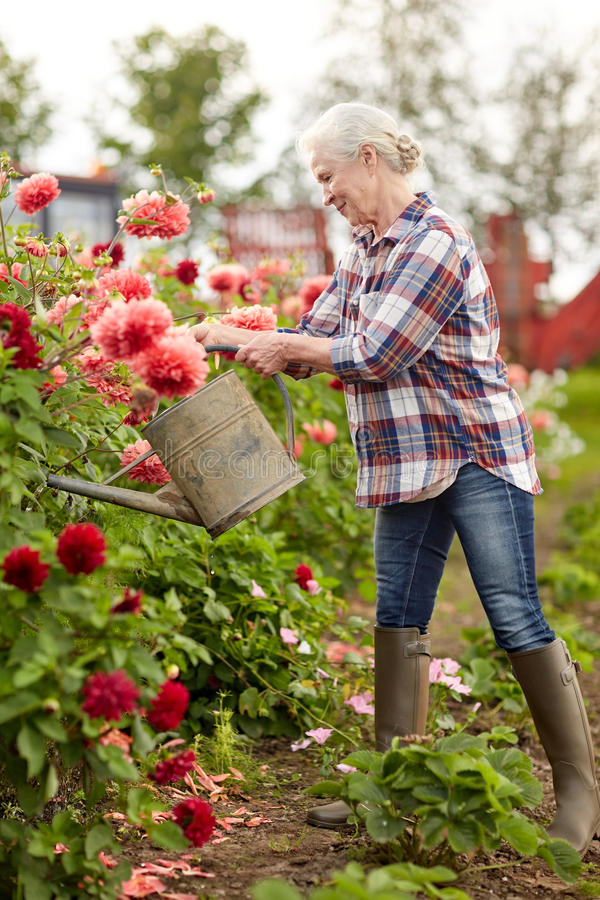 Hogere vrouw het water geven bloemen bij de zomertuin stock foto