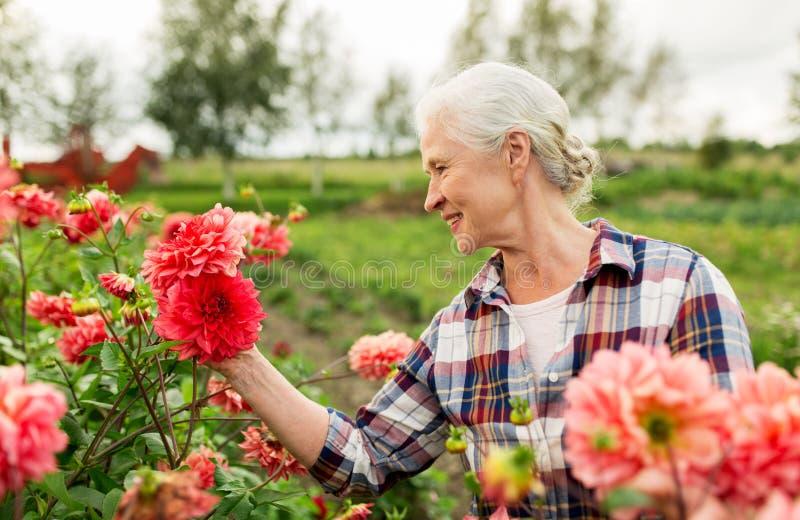 Hogere vrouw met bloemen bij de zomertuin royalty-vrije stock foto's