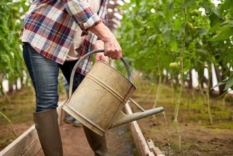 Hogere vrouw met gieter bij landbouwbedrijfserre royalty-vrije stock fotografie