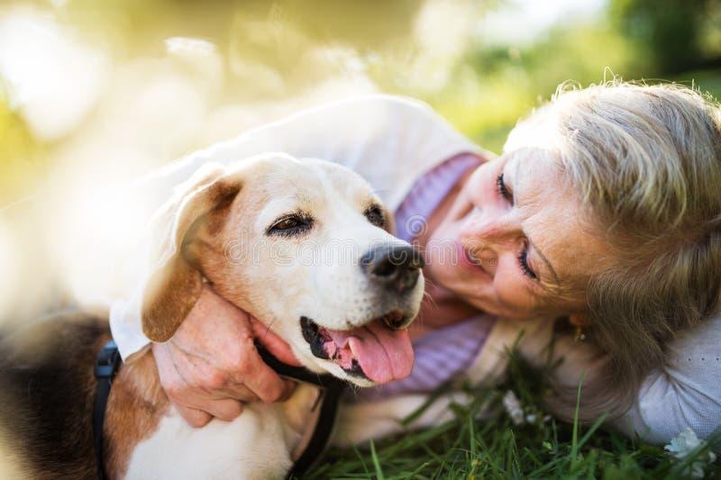 Hogere vrouw met hond in de lenteaard, het rusten stock afbeelding