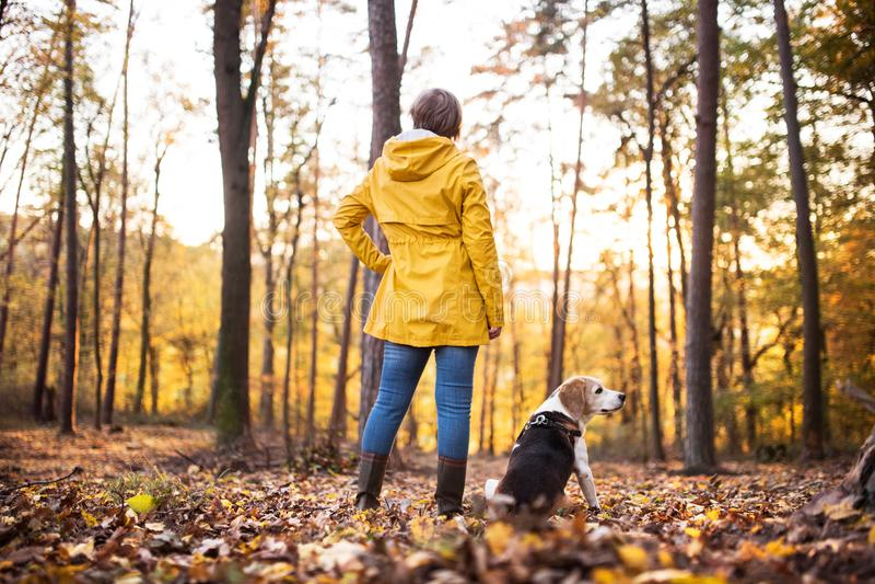 Hogere vrouw met hond op een gang in een de herfstbos royalty-vrije stock foto's