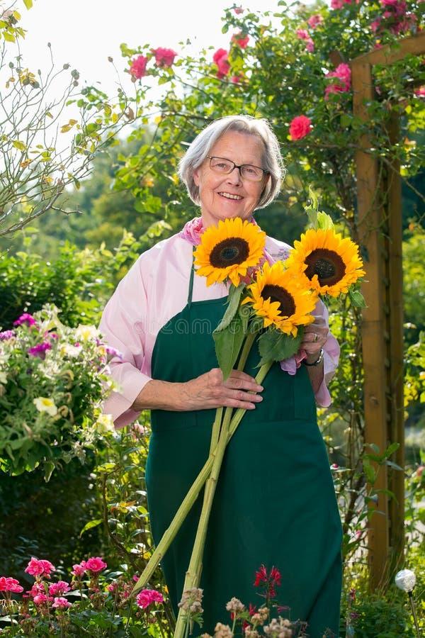 Hogere vrouw met zonnebloemen in tuin stock fotografie