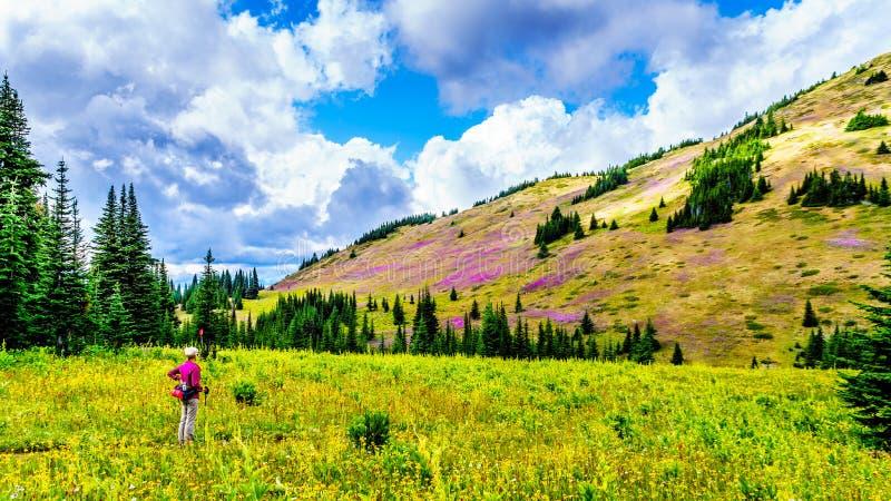 Hogere vrouw op een wandelingssleep in alpiene weiden bij de voet van Tod Mountain royalty-vrije stock afbeeldingen
