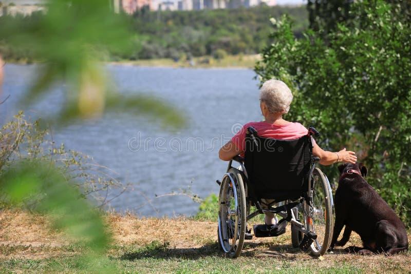 Hogere vrouw in rolstoel en haar hond dichtbij rivier stock afbeeldingen
