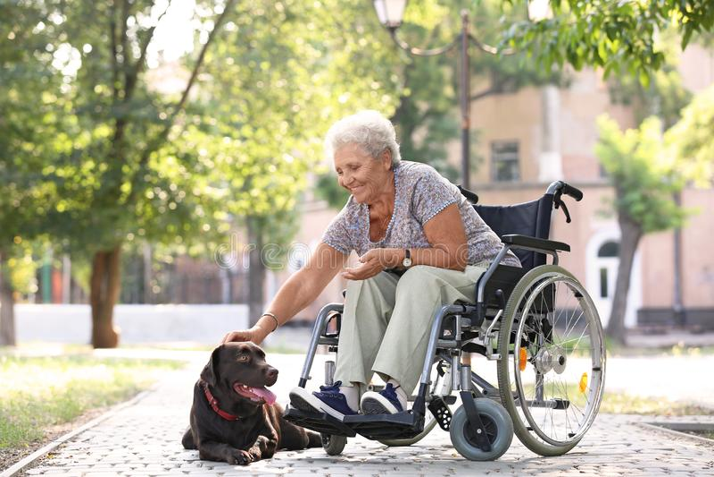 Hogere vrouw in rolstoel en haar hond in openlucht royalty-vrije stock afbeelding