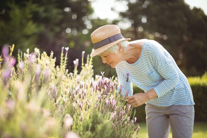 Hogere vrouwen ruikende bloemen stock fotografie