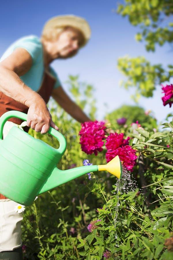 Hogere vrouwentuinman het water geven bloemen stock afbeelding