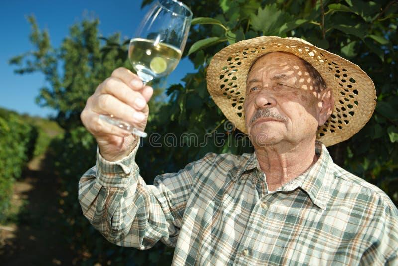 Hogere winemaker het testen wijn royalty-vrije stock foto's