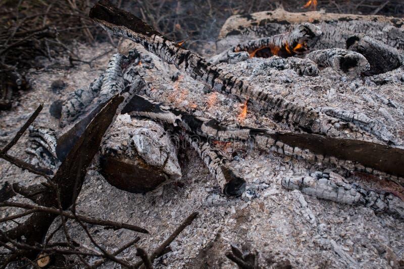 Hoguera, carbones y cenizas en el bosque foto de archivo