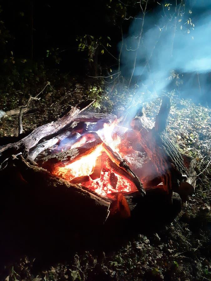Hoguera en bosque en la noche imagen de archivo libre de regalías