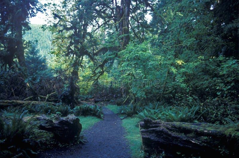 HOH National First Washington Rain Forest Olympic Peninsula, WA immagine stock libera da diritti