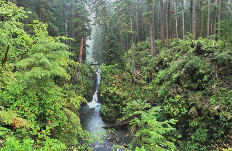 Hoh Rain Forest stockbilder