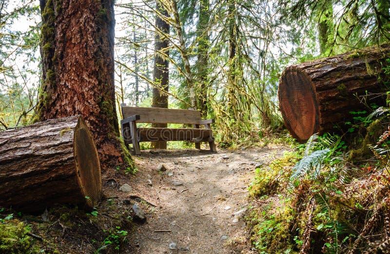 Hoh Rain Forest, Olympic National Park. Washington royalty free stock photography