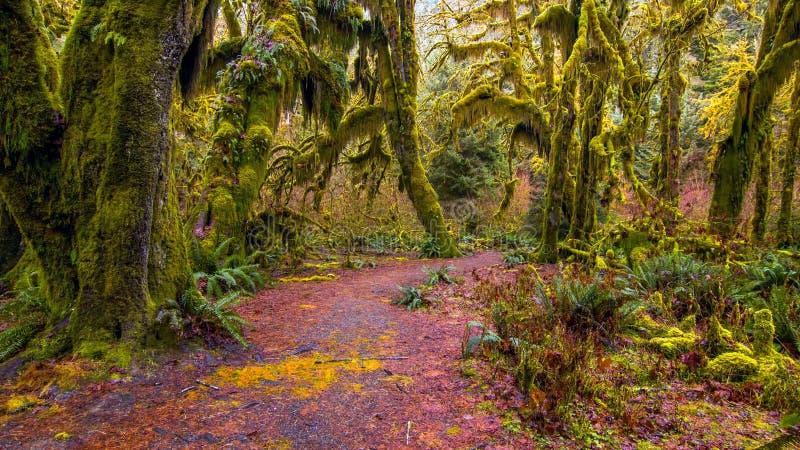 Hoh Rain Forest in Olympic National Park, Washington, USA stock photo