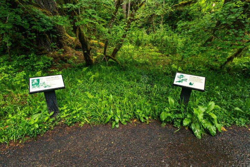 Hoh Rain Forest, Washington, Vereinigte Staaten von Amerika, Natur, Landschaft, Hintergrund, Wildtierwelt, Elk, Tourismus, Travel stockfotos