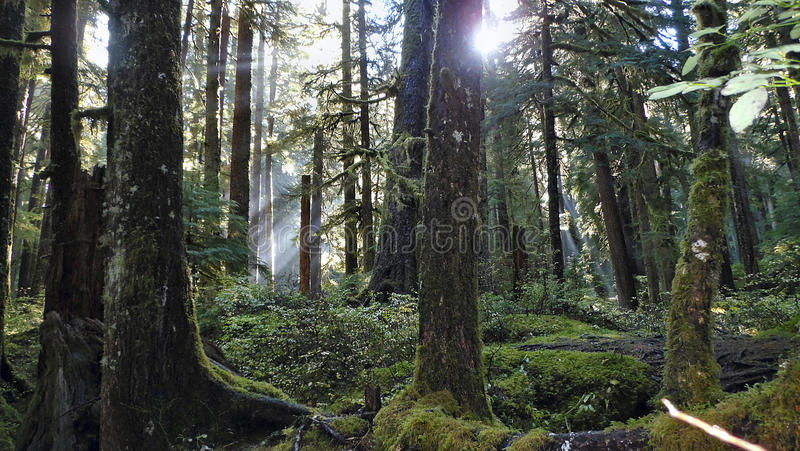 Hoh Rainforest fotografia de stock