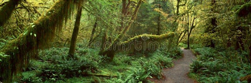 Hoh Tropikalny las deszczowy, zdjęcie royalty free