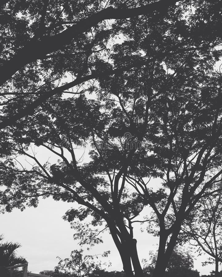 Hohe Bäume stockfoto