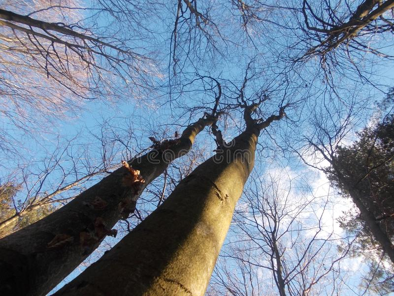 Hohe Bäume in der netten Perspektive lizenzfreie stockfotografie