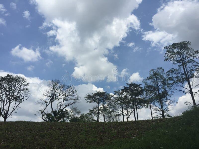 Hohe Bäume in einem tropischen Klima stockfotos
