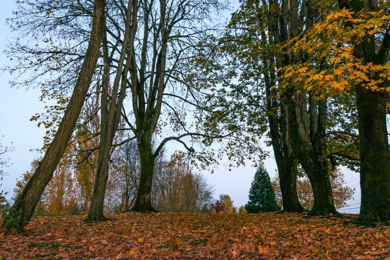 Hohe Bäume im Fall lizenzfreies stockfoto