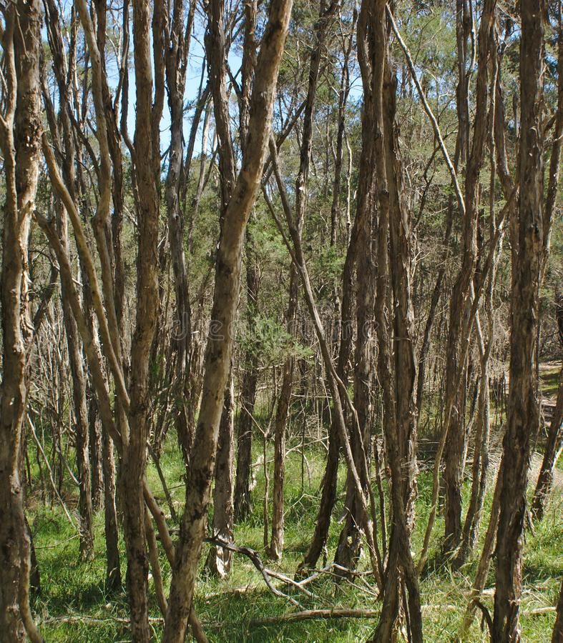 Hohe Bäume und grünes Gras im Wald stockfotos