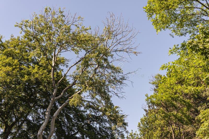 Hohe Bäume voll in der Blüte im Sommer lizenzfreie stockfotografie