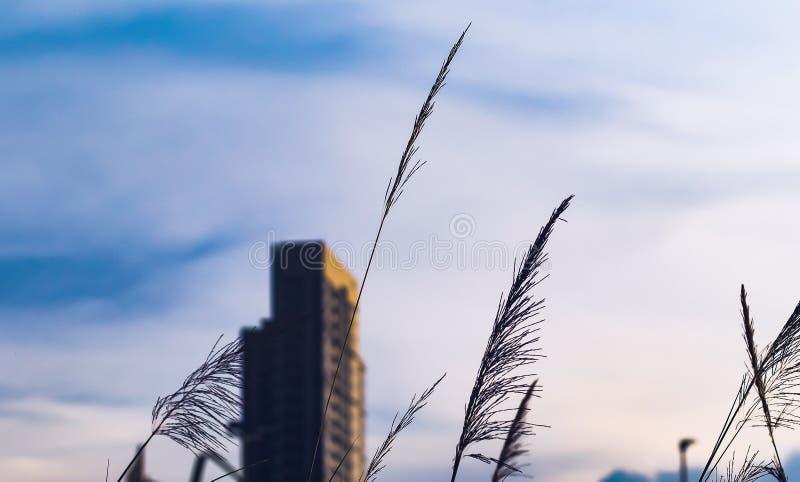 Hohe Gebäude entwerfen im Stadtzentrum über grünen Hügeln mit niedrigen Bäumen und wilden Gräsern St?dtische Auslegung stockfoto