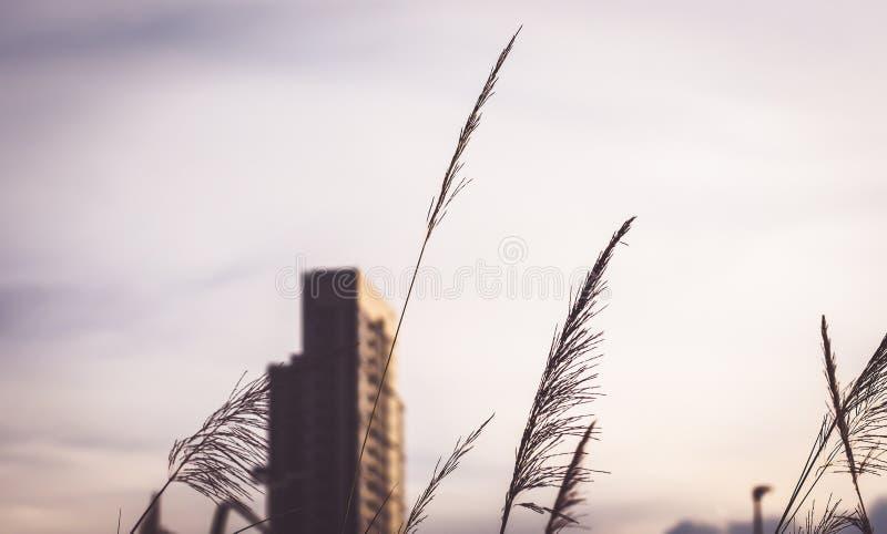 Hohe Gebäude entwerfen im Stadtzentrum über grünen Hügeln mit niedrigen Bäumen und wilden Gräsern stockbilder