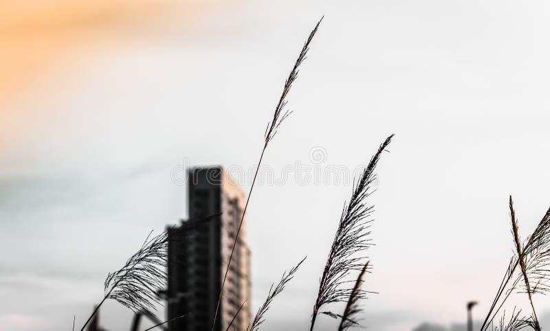 Hohe Gebäude entwerfen im Stadtzentrum über grünen Hügeln mit niedrigen Bäumen und wilden Gräsern lizenzfreies stockbild