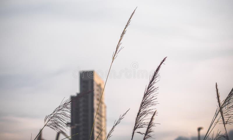 Hohe Gebäude entwerfen im Stadtzentrum über grünen Hügeln mit niedrigen Bäumen und wilden Gräsern lizenzfreie stockbilder