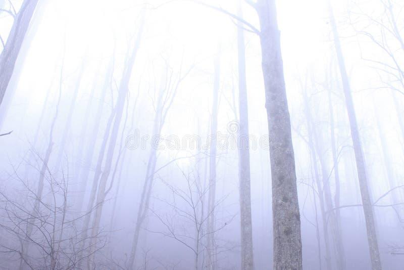 Hohe kahle Bäume im tiefen Wald des Nationalparks Great Smoky Mountains lizenzfreies stockfoto