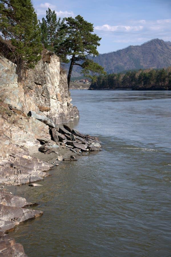 Hohe Kiefer, die auf bloßen Gleitern über einem Gebirgsfluss wachsen Altai, Sibirien, Russland landschaft stockfotografie