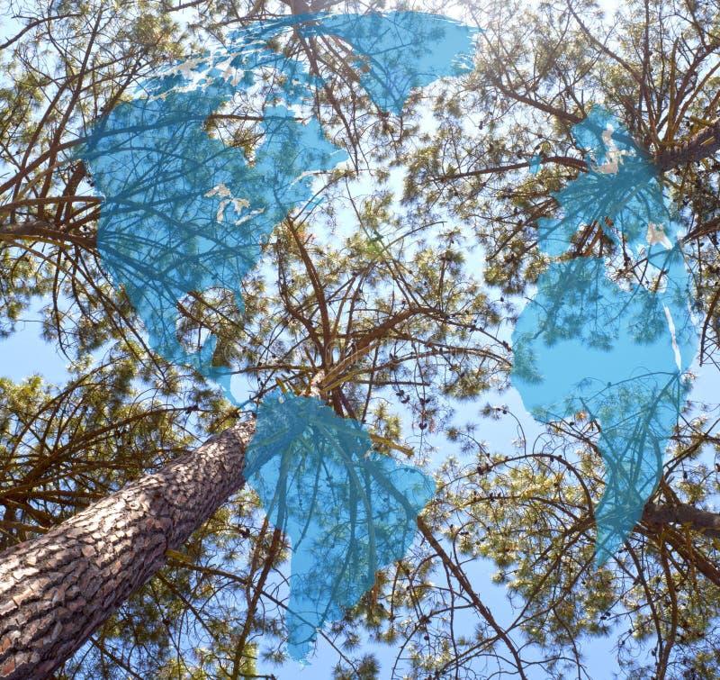 Hohe Kiefer in einem wolkenlosen Himmel im Sommer lizenzfreies stockbild