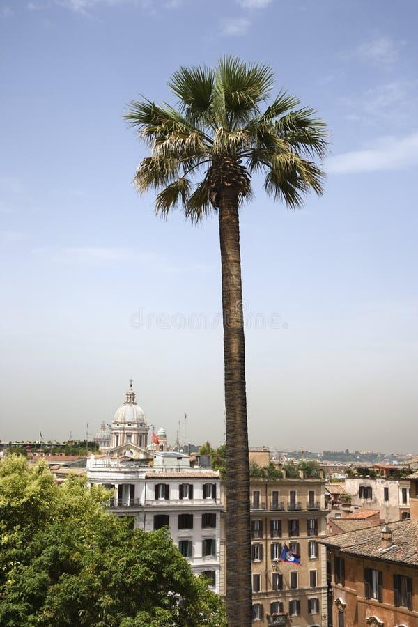Hohe Palme mit Gebäuden in Rom. lizenzfreies stockfoto