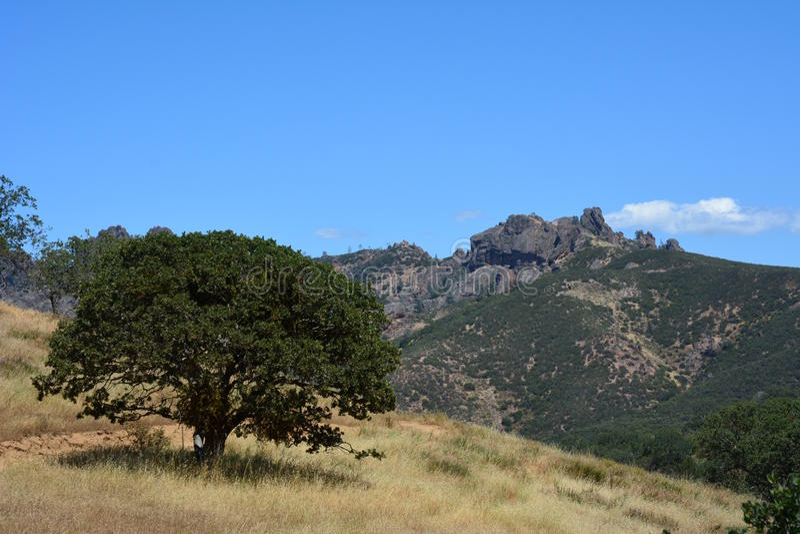 Hohe Spitzen des Nationalparks der Berggipfel mit Eiche stockbild