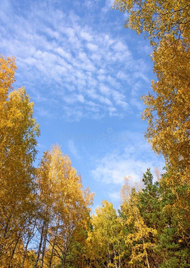 Hohe Suppengrün, die blauen Himmel mit weißen Wolken gestalten lizenzfreies stockfoto