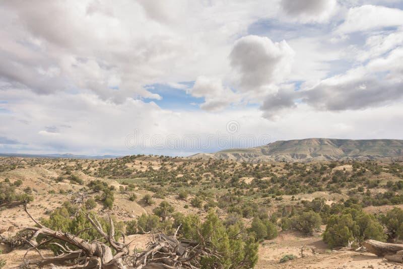 Hohe Wüsten-Landschaft im Frühjahr lizenzfreie stockbilder