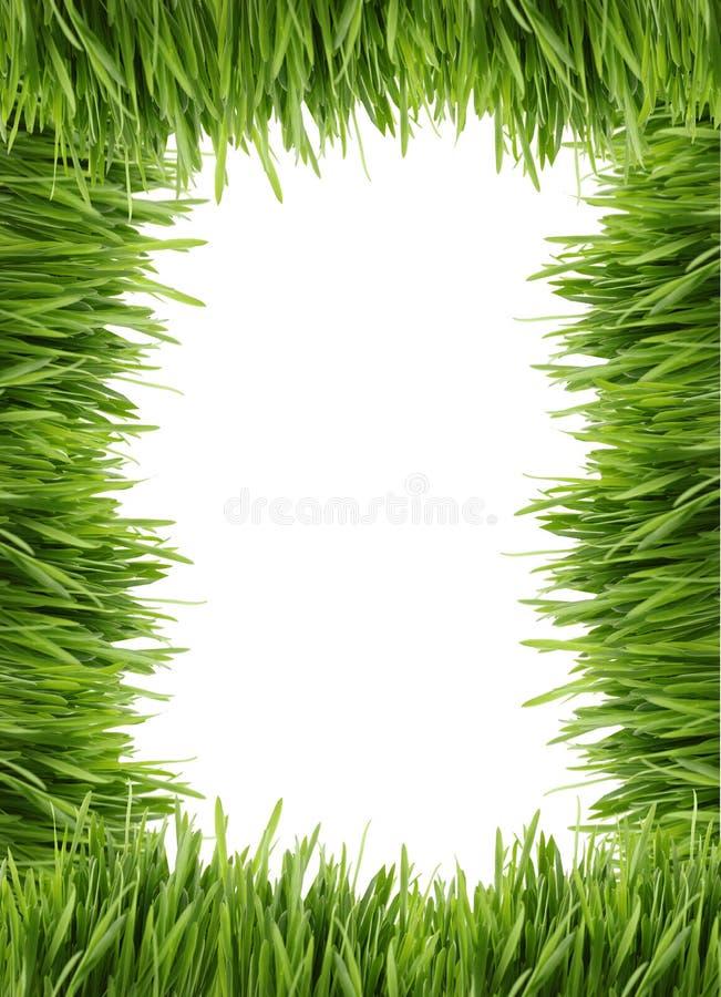 Hoher Grasrand oder -feld stockbilder