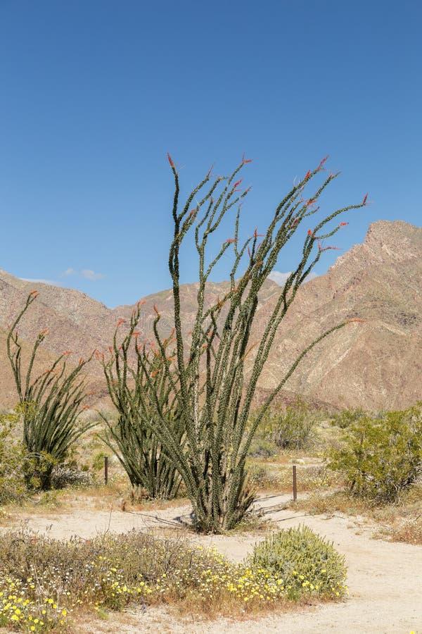 Hoher Kaktus in einer Spur lizenzfreies stockbild