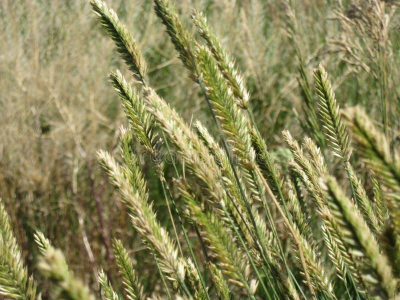 Das Hohe Gras