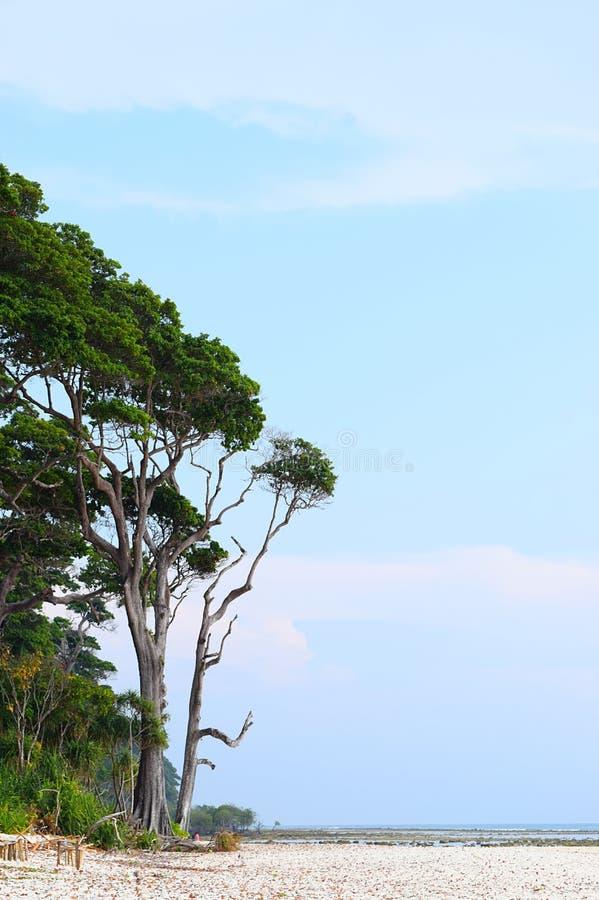 Hohes Meer Mohua - Manilkara Littoralis - Bäume gegen klaren blauen Himmel - Naturlandschaft - Laxmanpur-Strand, Neil Island, And lizenzfreie stockfotos