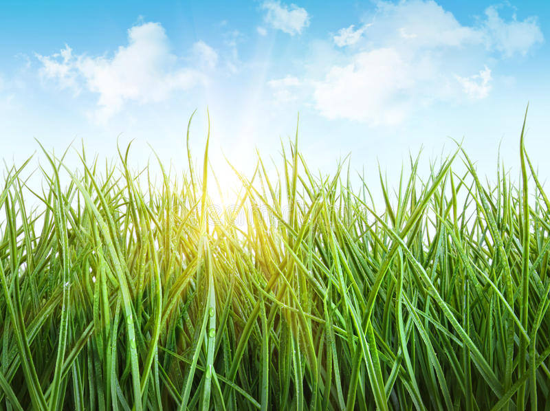 Hohes nasses Gras gegen ein Weiß lizenzfreie stockfotografie