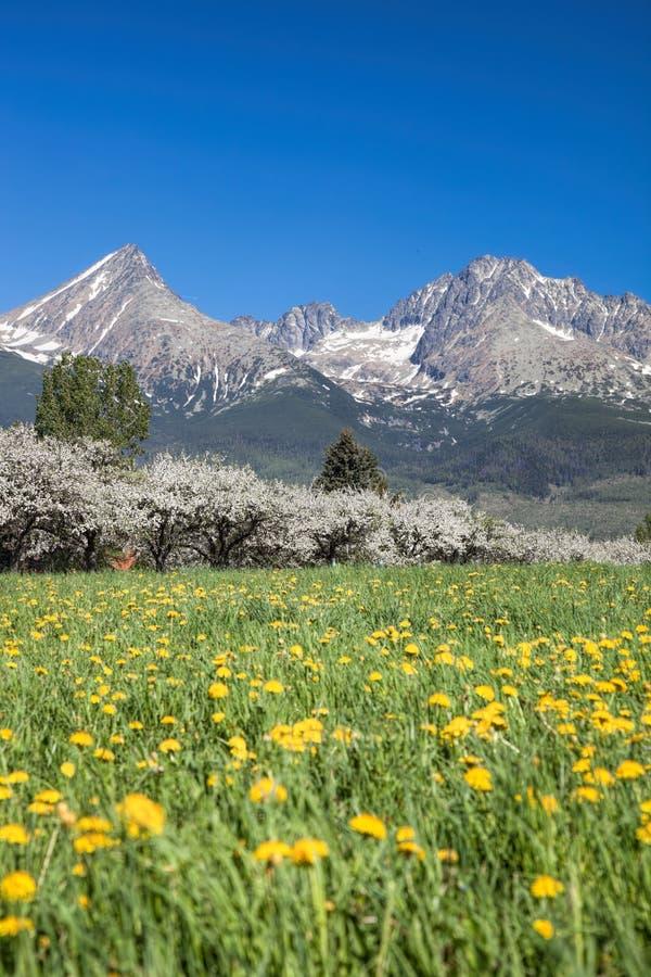 Hohes Tatras während der Frühlingszeit in Slowakei lizenzfreie stockfotos