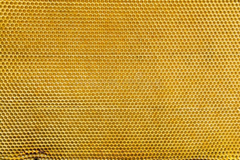 Hoheycomb thone的黄色颜色 库存图片